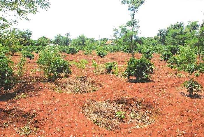 đảm bảo hợp đồng đặt cọc đất phải đúng với thực tế