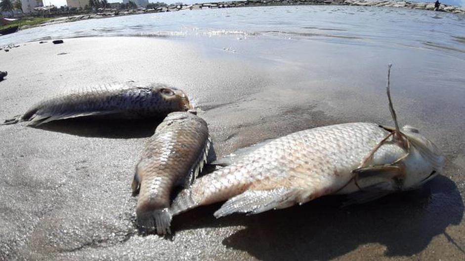 Mơ cá rô phi điềm lành hay dữ?
