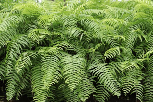 Top 9 loại cây cảnh để trong phòng ngủ thanh lọc không khí